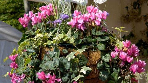 Best plants for winter hanging baskets: 13 picks for stunning seasonal displays