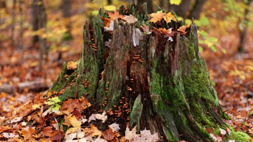 Follow our practical guide on how to remove a tree stump