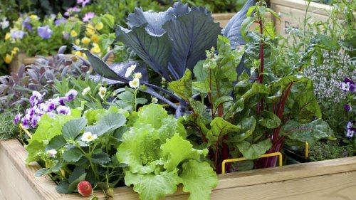 Small vegetable garden ideas – from layout designs to the best crops to grow