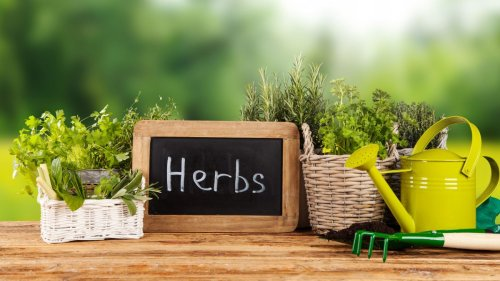Your ultimate guide on how to grow fresh herbs in your garden