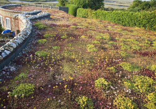 Green roofs – a guide to sedum roofs