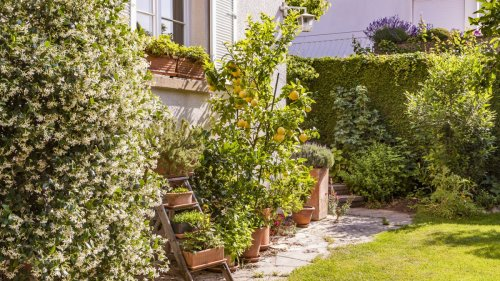 Growing fruit in pots: how to plant and care for container grown fruit
