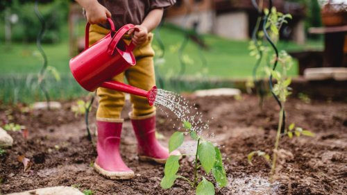5 surprising health benefits of gardening for children, according to a medical expert