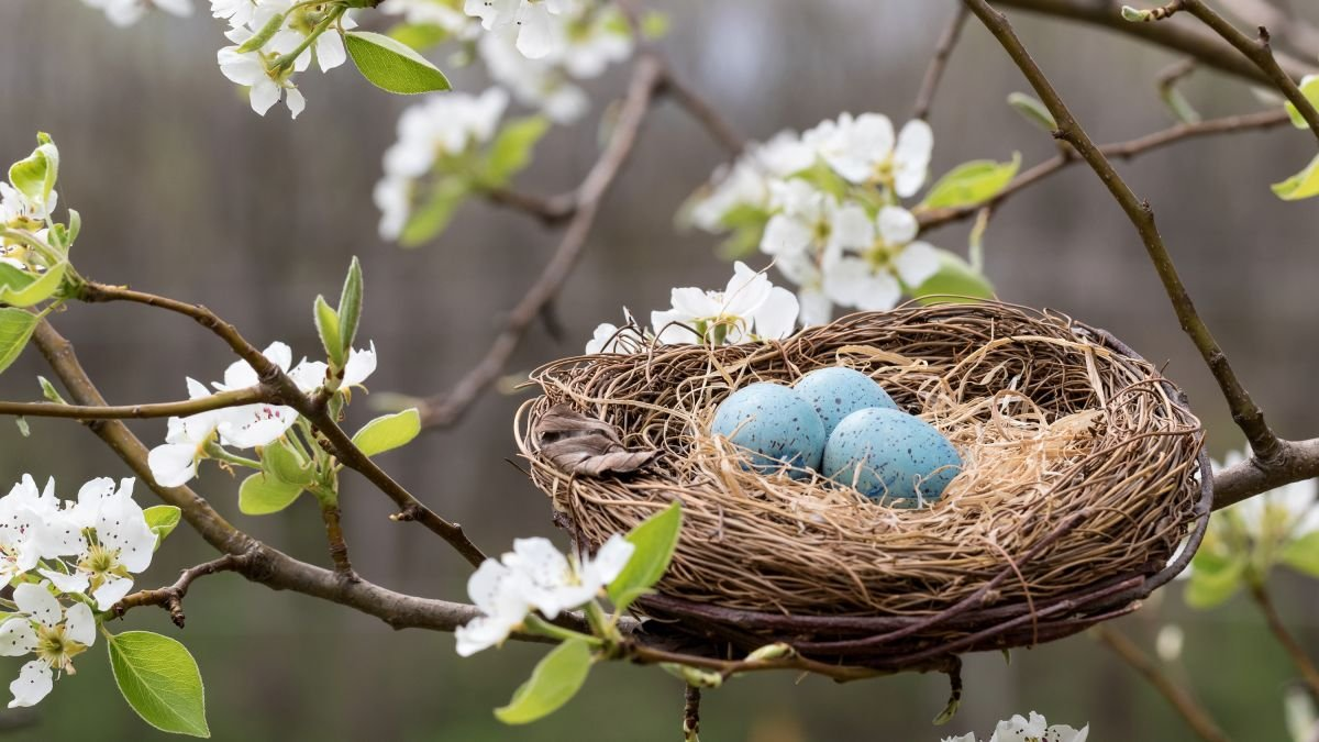 Is it illegal to remove a bird's nest? Avoid breaking the law in your own backyard
