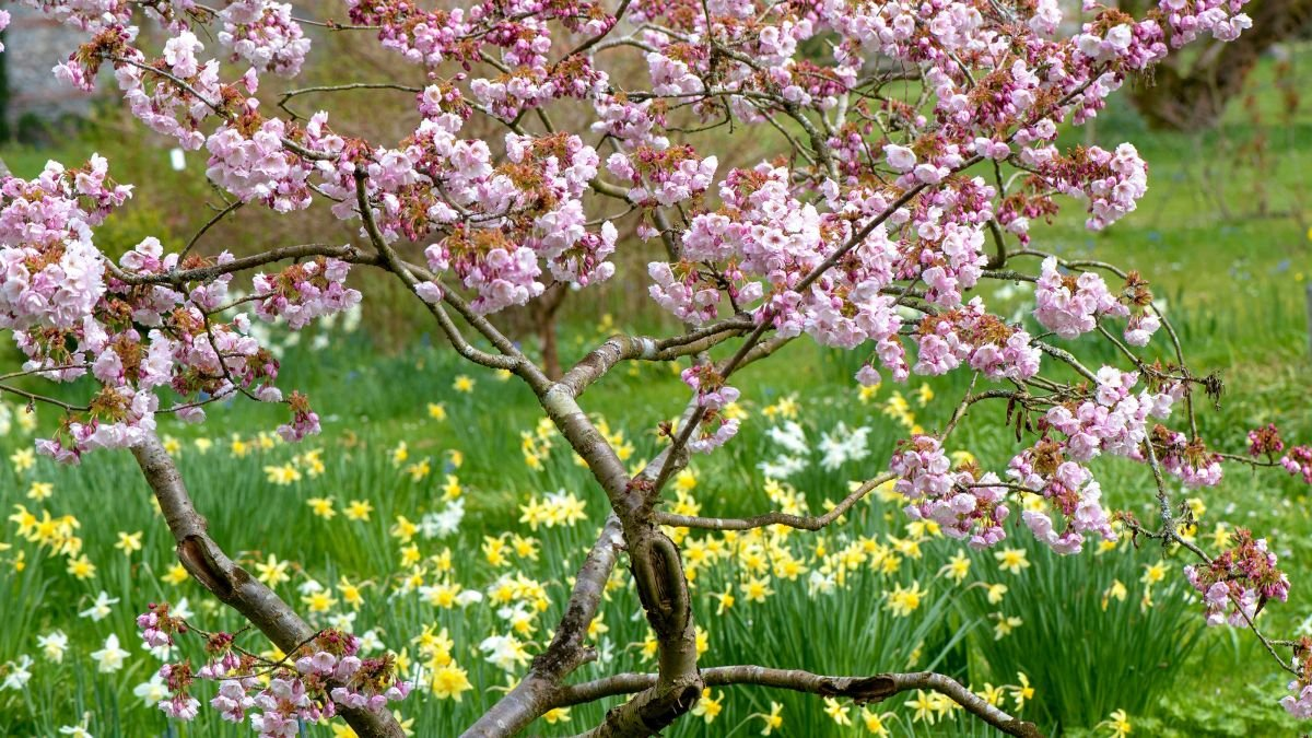 Best trees for small gardens: 11 top picks for less-than-large plots