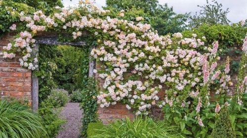 Best climbing roses: find the perfect rose for your plot, plus top tips on where to plant them