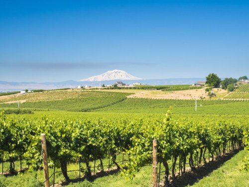 Why Walla Walla is one of the best wine tasting holidays in the USA
