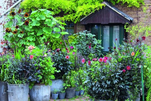How to make a small garden into a flower haven with Arthur Parkinson's expert advice