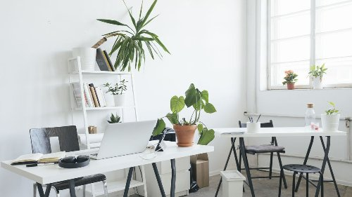 The best plants for an office desk