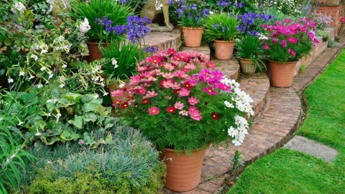 Monty Don shares container gardening secret that will help you to grow more flowers
