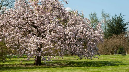 8 beautiful flowering tree varieties to add color and interest to your garden