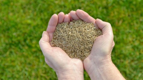 How to plant grass seed: the best ways to sow and grow a lawn, fast