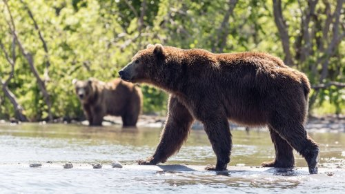 Friends see hiker torn to death and eaten by bear