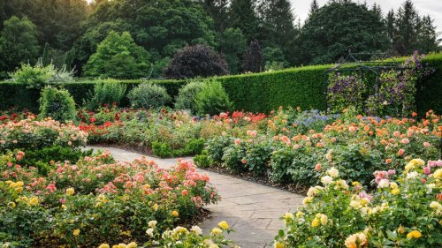 Types of roses: 11 beautiful varieties for your garden