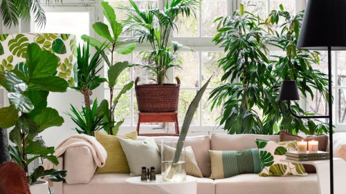 Hilton Carter shares his top house plant styling tips