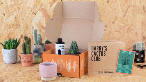 Stop killing plants forever with this Hard-To-Kill mini plant subscription box
