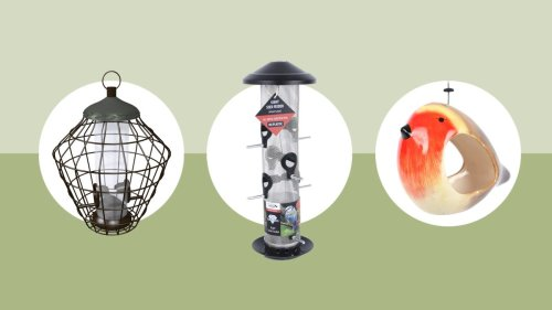 These are the best bird feeders that will attract feathered visitors to your outdoor space