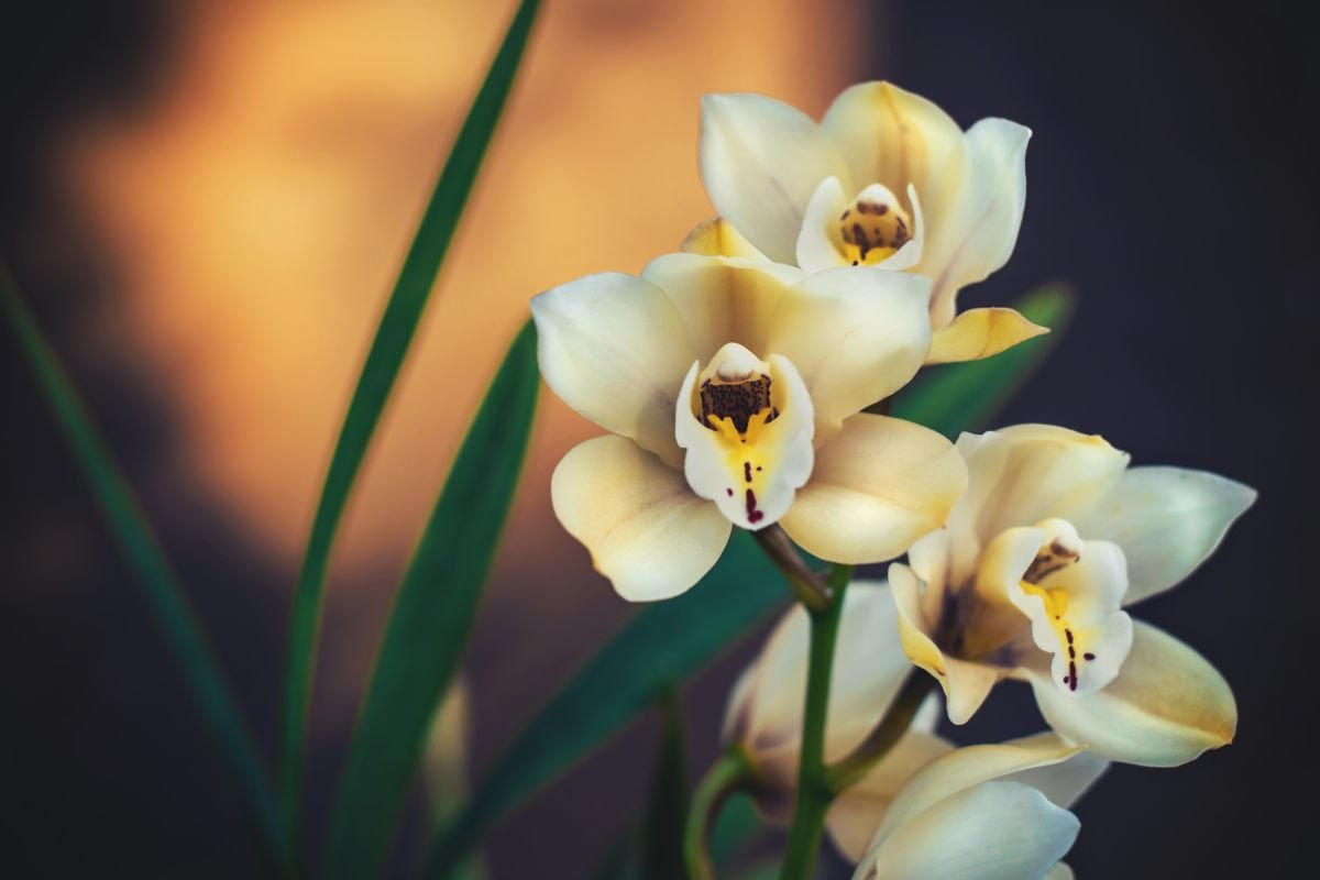 How to repot your orchid