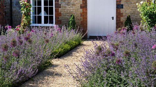 A step-by-step how to grow lavender