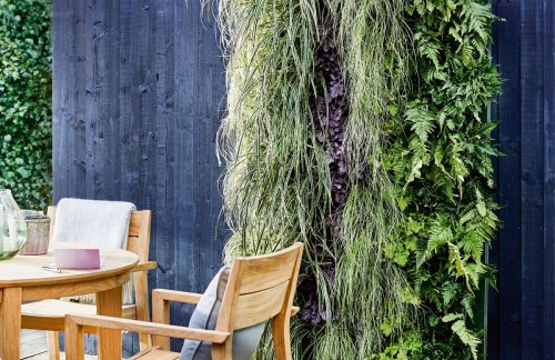 Create a living wall with this easy step by step to DIY your own living wall system
