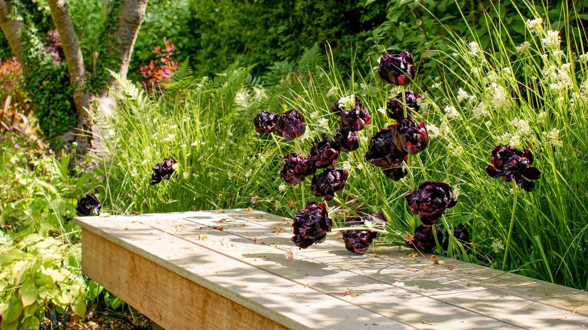 Shade garden ideas: 14 gorgeous designs to transform the shadowy spots in your plot