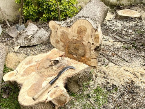 How to kill a tree stump: an easy step-by-step guide to using natural and chemical methods