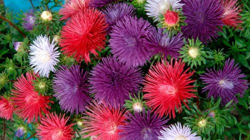 5 flower seeds to sow in April: add these to your planting list