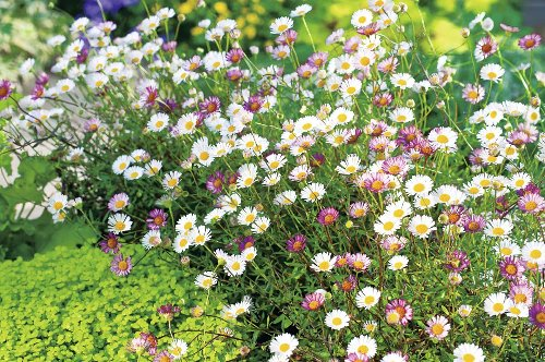 5 plants for long summer color: add these to your flowerbeds