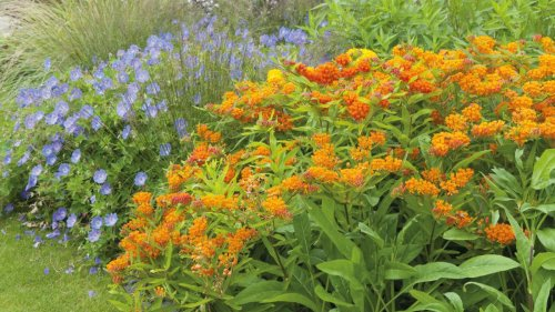 5 unusual plants for a summer garden