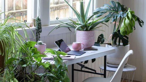 Do house plants clean the air? Scientists debunk the NASA-endorsed myth