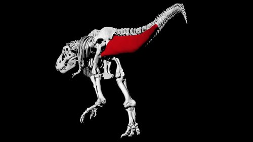 Never mind outrunning a T. rex — you could probably outwalk it