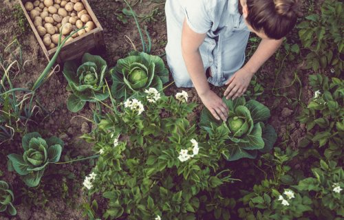 5 garden experts reveal the gardening lessons they've learned this year...