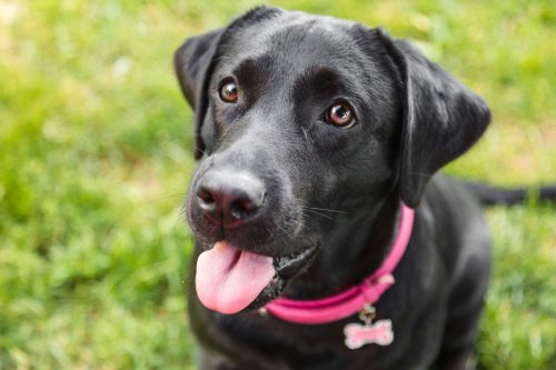 Trained dogs can smell coronavirus in your pee