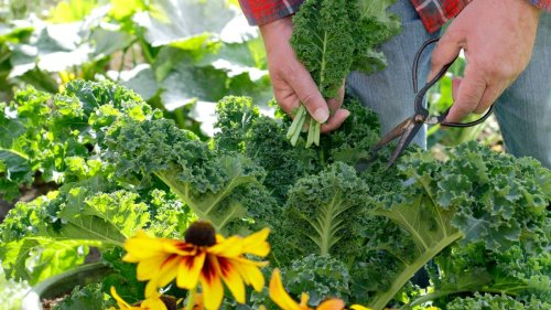 Best companion plants for kale: herbs, flowers and veg to grow next to kale