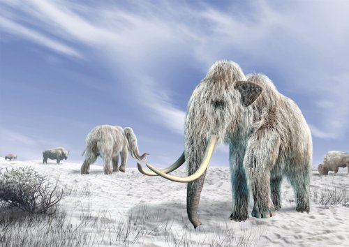 Frozen in time: 5 prehistoric creatures found trapped in ice