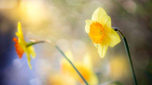 Shoot amazing flower portraits in your garden