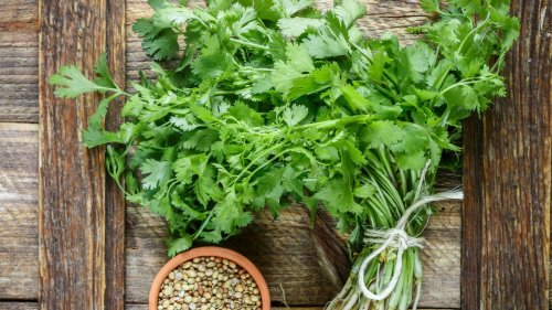 How to grow cilantro: tips on sowing, growing and harvesting this versatile herb