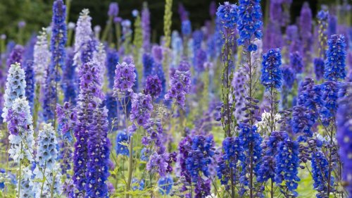 What to plant in July: 10 beautiful flowers to sow and grow this month