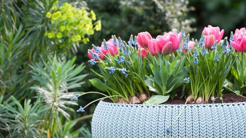 Everything you need to know about spring bulb planting