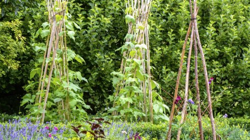 It's not too late to start a vegetable garden this summer – if you take Monty Don's advice