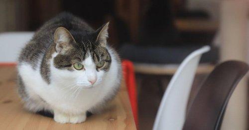 Studie zeigt, dass Katzen gerne in Quadraten sitzen