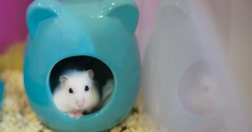 Hamster handelt mit Kryptowährungen und macht 45 Prozent Rendite