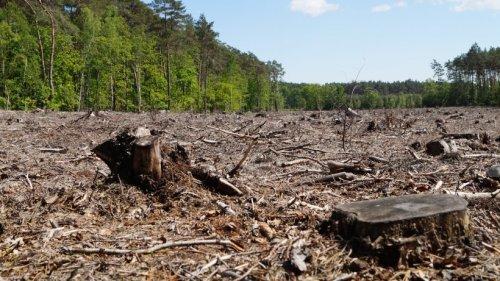 """Tausende Forscher warnen: """"Lebenszeichen"""" der Erde werden schwächer"""