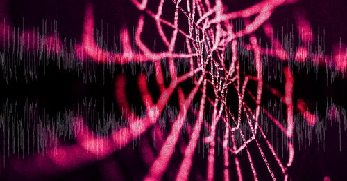 MIT Researchers Release Music Made by Spiders
