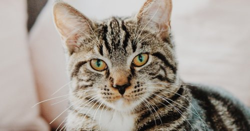 This Cat DNA Test Will Unlock The Genetic Secrets Of Your Feline Friend