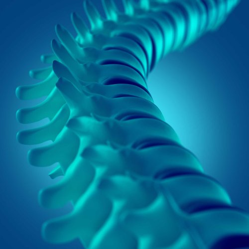 There's a $100 million plan to make a synthetic spinal cord to end paralysis