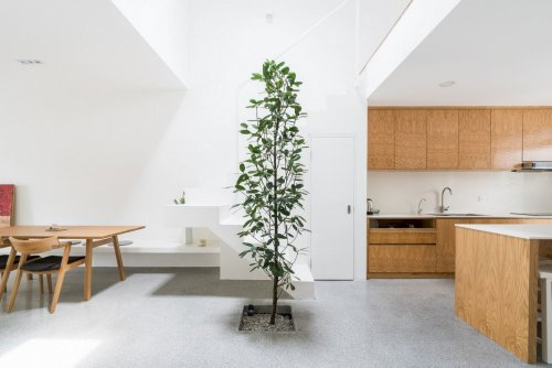 Jose House: A Single-Storey Terrace House with A Roof Viewing Deck