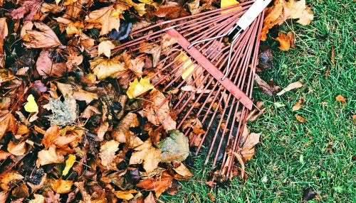 3 green things to do with your raked leaves this fall - Futurity