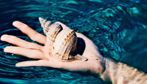 Ancient shells hint past high CO2 levels could return - Futurity