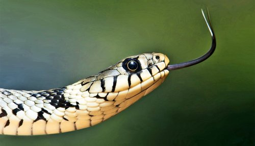 Your fear of snakes may come from subconscious bias - Futurity